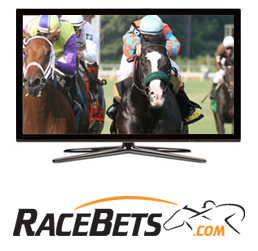 live horse race streaming