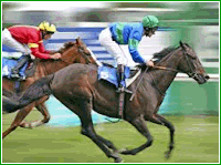 India Horse Racing - Bet Horse Races Online