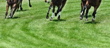 Weekend Indian Horse Racing Tips - June 23rd, 2019