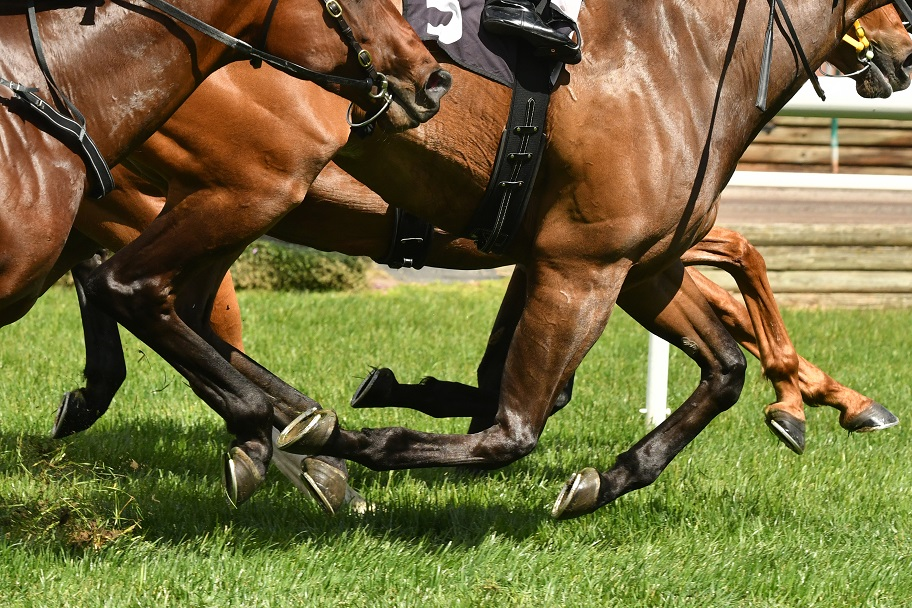 how to bet on horse racing in bangalore