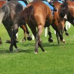 HRC Pushes Telangana Government To Allow Online Horse Race Betting