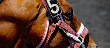 India Horse Betting Review – 10 November, 2019